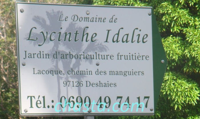 idalie-lucinthe