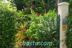 jardin-botanique-02209