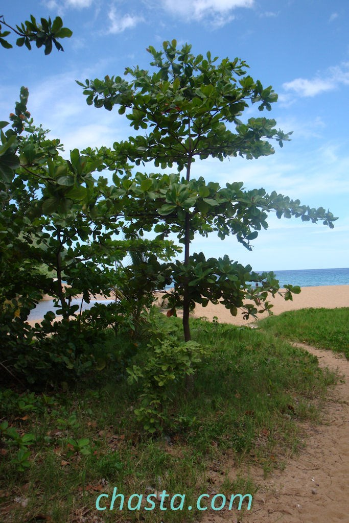 plage-grande-anse-02142