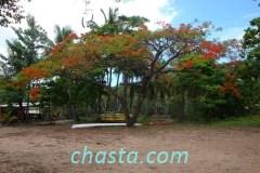 plage-grande-anse-02135